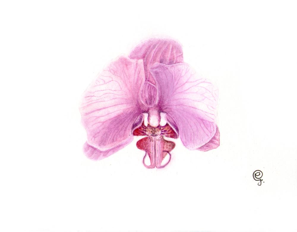 orchid 300dpi
